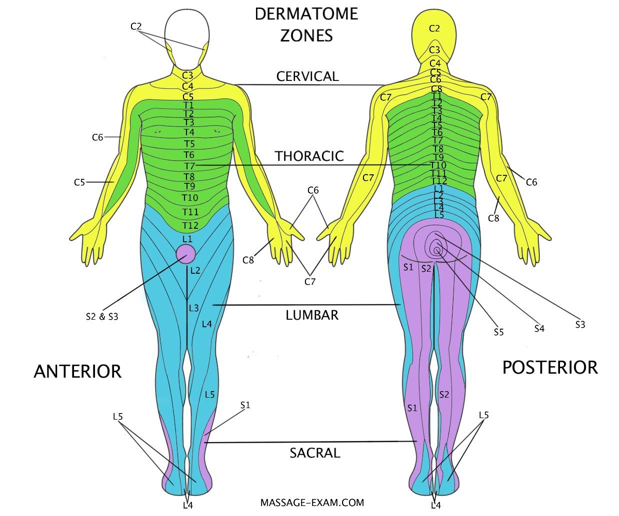 Skilful masseur dips rod in hole